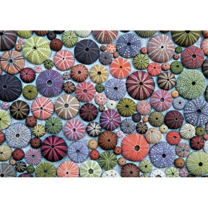 Puzzle Oursins